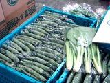 20110604_船橋中央卸売市場_ふなばし楽市_0900_DSC02828