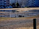 20110313_東日本大震災_南船橋駅前_液状化_企業庁_1433_DSC00360