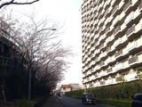 20110410_船橋市浜町2_三井ガーデンホテル_サクラ_1547_DSC07689