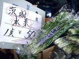 20110604_船橋中央卸売市場_ふなばし楽市_0900_DSC02829