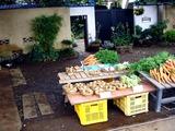 20110619_船橋市海神6_農産物直売所_野菜販売_1205_DSC05777