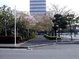 20110416_船橋市浜町2_三井ガーデンホテル_サクラ_桜_1516_DSC07958