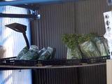 20110109_船橋市三山3_農産物直売_野菜直売_1301_DSC01177