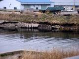 20110402_東日本大震災_市川市二俣新町_堤防震災_1049_DSC00211