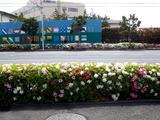 20110502_ららぽーとTOKYO-BAY前_ツツジ_0932_DSC09221
