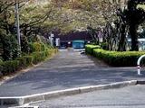 20110416_船橋市浜町2_三井ガーデンホテル_サクラ_桜_1516_DSC07960