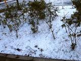 20110116_船橋市_積雪_雪化粧_寒気_冬型_1017_DSC02419