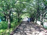20110604_第26回船橋海老川親水市民まつり_0931_DSC02920
