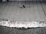 20110317_東日本大震災_浦安_舞浜駅前南口_液状化_1452_DSC07143