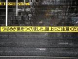 20110605_JR西船橋駅_北口_階段_ツバメ_巣_1115_DSC03993