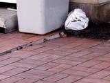20110313_東日本大震災_袖ヶ浦団地_ピーコック_1109_DSC09378
