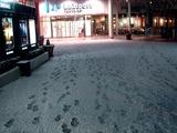20110214_ららぽーとTOKYO-BAY_大雪_2233_DSC06336