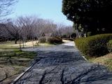 20110313_東日本大震災_海浜香澄公園_液状化_1157_DSC09654