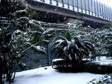 20080203_首都圏_船橋市_大雪_積雪_1234_DSC07222