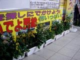 20110318_JR京葉線_JR南船橋_ナノハナ_菜の花_2112_DSC07622