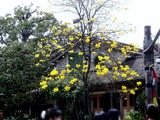 20110502_東京ディズニーランド_花_1311_DSC09579