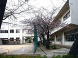 20110403_習志野市袖ヶ浦_袖ヶ浦西小学校_桜_1117_DSC06686
