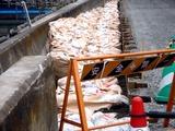 20110402_東日本大震災_船橋市日の出2_堤防破壊_0955_DSC09973