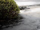 20110312_東日本巨大地震_船橋オート_液状化_1618_DSC08830