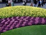 20110502_東京ディズニーランド_花_1020_DSC09311