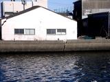 20110326_東日本大震災_船橋市栄町2_堤防破壊_1603_DSC08923