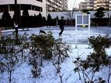 20110116_船橋市_積雪_雪化粧_寒気_冬型_1017_DSC02418