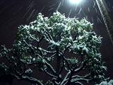 20110214_ららぽーとTOKYO-BAY_大雪_2252_DSC06396