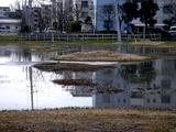 20110316_東日本大震災_南船橋駅前_企業庁_1108_DSC06831