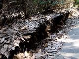 20110313_東日本大震災_海浜香澄公園_京葉道路脇_1209_DSC09725