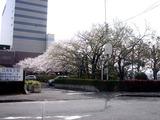 20110410_船橋市浜町2_三井ガーデンホテル_サクラ_桜_1356_DSC07355