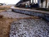 20110116_船橋市_積雪_雪化粧_寒気_冬型_1323_DSC02956