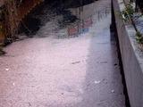 20110416_船橋市本町6_長津川_長津川親水公園_1441_DSC07917