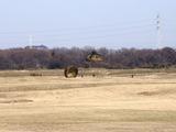20110109_陸上自衛隊_習志野演習場_降下訓練始め_1136_DSC00815