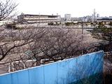 20110104_船橋市若松1_船橋競馬場_桜_0959_DSC00010