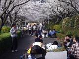 20110410_船橋市浜町2_三井ガーデンホテル_サクラ_桜_1546_DSC07684