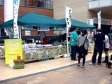 20110430_ららぽーとTOKYO-BAY_産地応援野菜即売会_1306_DSC08696
