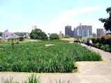 20110604_東京江戸川区小岩菖蒲園_ショウブ_1224_DSC03575