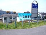20110604_東京江戸川区小岩菖蒲園_ショウブ_1214_DSC03534