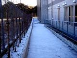 20110116_船橋市_積雪_雪化粧_寒気_冬型_1108_DSC02549