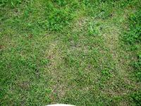 20110619_船橋市海神4_飛ノ台史跡公園博物館_放射線量_1341_DSC05929