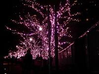 20111219_東京大崎_クリスマス_イルミネーション_1915_DSC05740