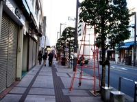 20111126_船橋本町通り商店街_クリスマス飾り_1006_DSC02506