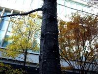 20111216_東京都千代田区丸の内_クリスマス飾り_0958_DSC05161