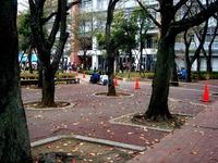 20111103_習志野市泉町1_日本大学生産工学部_桜泉祭_1339_DSC09383