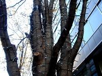 20111216_東京都千代田区丸の内_クリスマス飾り_1001_DSC05180