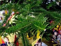 20111204_ららぽーとTOKYO-BAY_クリスマスツリー_1019_DSC03607