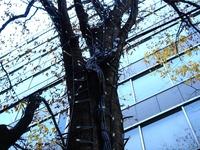20111216_東京都千代田区丸の内_クリスマス飾り_1000_DSC05176