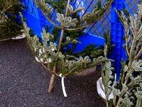 20131130_船橋市浜町2_IKEA船橋_クリスマスツリー_1634_DSC00336