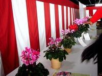 20121111_船橋市市場1_船橋中央卸売市場_農水産祭_1036_DSC01059