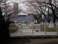 20130323_三井ガーデンホテルズ船橋ららぽーと_桜_0922_DSC06958